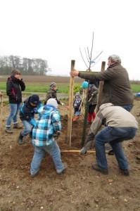 Neue Bäume werden gepflanzt